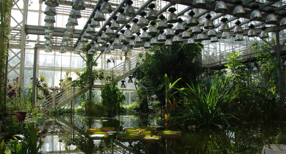 Wonderful The Main Botanical Gardens Of The Russian Academy Of Sciences (RAS), Named  In Honor Of N. V. Cicin, Is One Of The Largest Botanical Gardens In Europe  And ...
